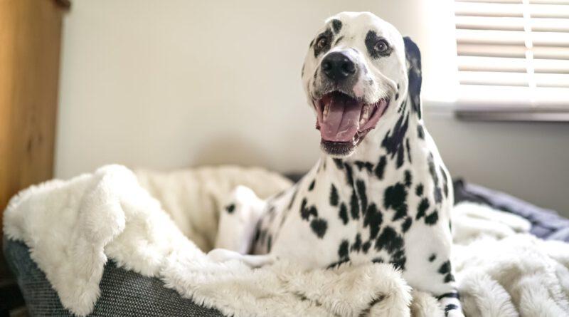 fluffy hondenmand