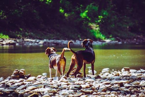 Honden blog